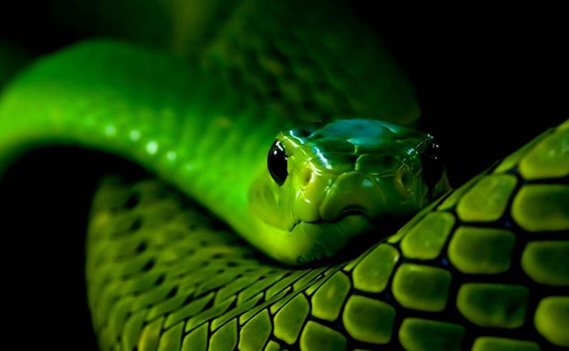 Гороскоп на 2018 год Змея
