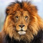 Гороскоп на октябрь 2018 года для Льва