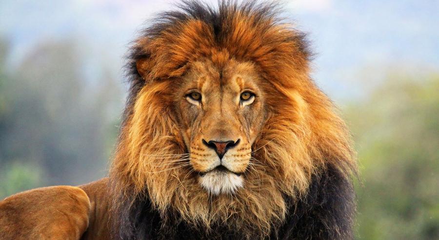 диета по гороскопу лев и кролик