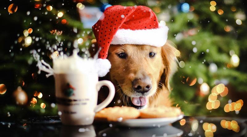 Картинки по запросу с новым годом собачка